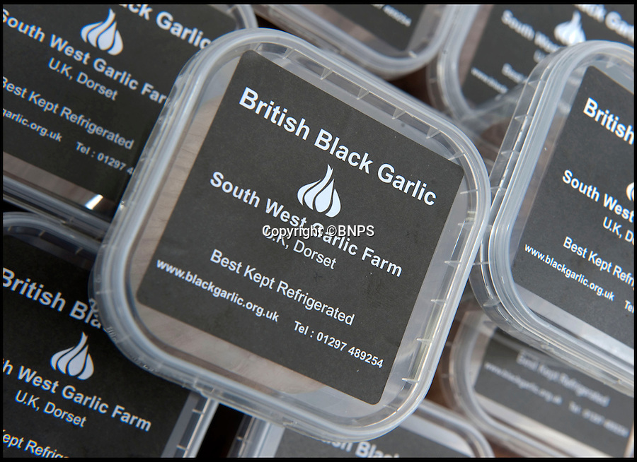 Bmth News &amp; Pictures 01202 558833<br /> Pic: PhilYeomans/BNPS<br /> <br /> Black gold...Demand is outstripping supply.<br /> <br /> A British farmer has launched this year's must-have food product after stumbling across a 4,000-year-old Korean recipe on the internet.<br /> <br /> And now the Dorset farmer is hoping to become Britain's first Garlic Millionaire as top chefs inundate him with orders for the unique product.<br /> <br /> His top secret recipe includes slow cooking the pungent bulbs for 40 days to change their colour, texture and taste.<br /> <br /> Mark Botwright wanted to find a way of preserving some of the 900,000 bulbs of garlic grown on his farm so they could be eaten all year round.<br /> <br /> The answer came when he chanced upon an ancient Korean recipe for 'black garlic', a way of preserving garlic bulbs using exposing them to heat and moisture for more than a month.<br /> <br /> Mark spent 18 months perfecting the recipe to transform regular garlic bulbs into sweety, sticky black garlic, said to have the texture of dried apricots and the taste of balsamic vinegar.<br /> <br /> He even built his own special heating room at his 13-acre farm in Bridport, Dorset, so that he could ramp up production to 2,500 bulbs every 40 days.<br /> <br /> The product has been such a hit he now supplies it to some of the best restaurants in the country including The Ritz and The Ivy.<br /> <br /> And it has been given the thumbs up by a host of top chefs including Nigella Lawson, Mark Hix and Yottam Ottelenghi.<br /> <br /> One bulb of black garlic costs 3.50 pounds and has a shelf life of over a year.