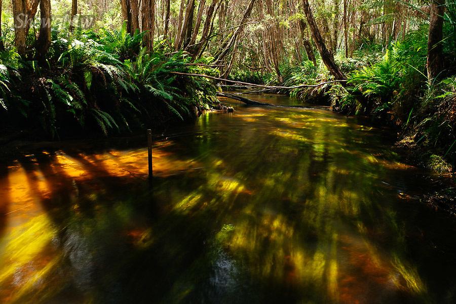 Image Ref: YR182<br /> Location: Murrindindi River, Toolangi<br /> Date: 27.01.18