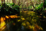 Image Ref: YR182<br />