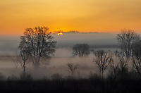 The sun rises above the grasslands  and a few trees at Phyllis Haehnle Memorial Sanctuary in Jackson County, Michigan