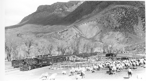Unloading sheep at stockyards on wye tail track.<br /> D&amp;RGW  Cimarron, CO  Taken by Perry, Otto C. - 5/8/1949<br /> In book &quot;Gunnison: Covering Marshall Pass, Lake City, Crested Butte thru to Ouray&quot; page 188
