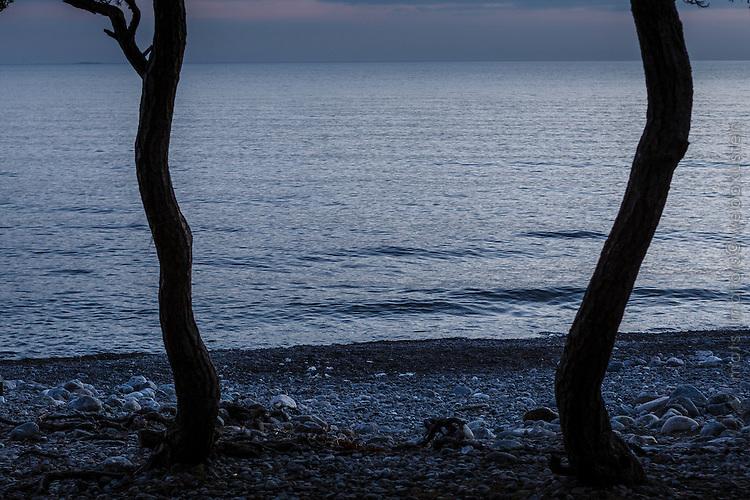 Trädsammar på stranden vid skymning på Torö vid havet i Stockholms skärgård.