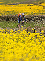 2015_06_10_YELLOW_FIELDS
