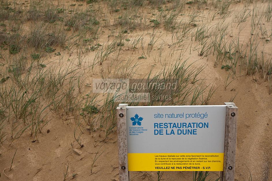 Europe/France/Bretagne/56/Morbihan/ Belle-Ile-en-Mer/Donnant: Port Donnant - Plage de Donnant - Restauration de la Dune par le Consrvatoire du Littoral