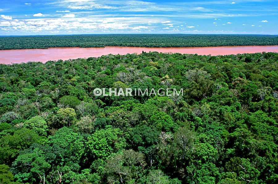 Floresta no Parque Nacional do Iguaçu. Foto de Ricardo Azoury.