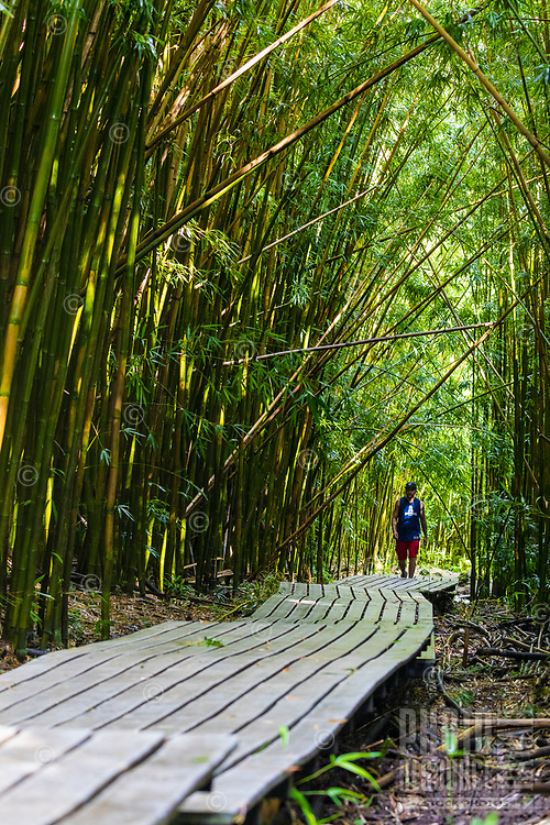 A hiker on the walkway through a bamboo forest in the Kipahulu district of Haleakala National Park, Maui.