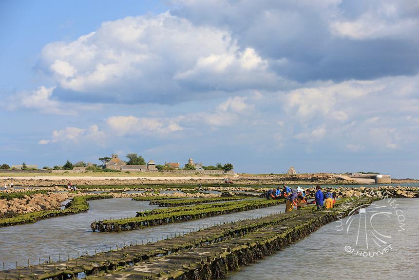 France, Normandie, Manche (50), Saint-Vaast-La Hougue, ile de Tatihou, conchlyliculture, huitres // France, Normandy, Manche, Saint Vaast la Hougue, Tatihou island, oysters farms
