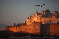 ESSAOUIRA, MOROCCO - MAY 11 : A view from below of a seagull in flight on May 11, 2009 in Essaouira, Morocco. A bird sweeps over the Ramparts at sunset. The old town is visible in the background. Essaouira, on the windswept Atlantic coast of Morocco, was re-built in the 18th century by French architect Theodore Cornut to the orders of Sultan Ben Abdullah. Surrounded by ramparts it is a charming small town now becoming more popular with tourists. (Photo by Manuel Cohen)