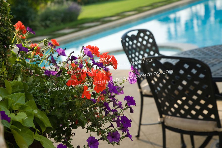 detail of a colorful container of summer annuals including deep purple petunias and bright red geraniums , in the warm late afternoon sun with a metal patio table and chair, and the blue water of a swimming pool in the soft background