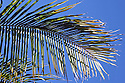 palm tree leaves against bright blue sky