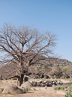 A class of Nuba tribe school children taught under the shade of a Baobab tree in the village Nyaro, Kordofan region, Sudan