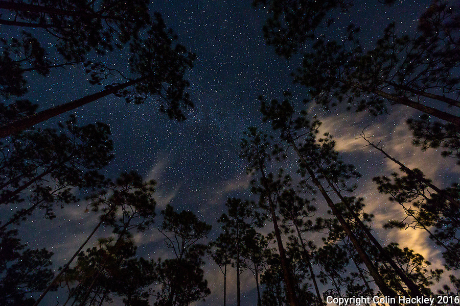 CRAWFORDVILLE, FLA. 11/5/16-Starlight and moonlight mix in the night sky while camping in the Apalachicola National Forest.<br /> <br /> COLIN HACKLEY PHOTO