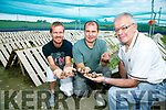 Kerry's first crop of Snails from Ballyhar snail farm. Pictured Tomas Griciunas, Marius Bielovas and Vincent Scott