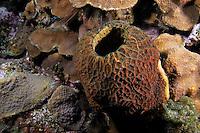 Sponge, Bahama Islands