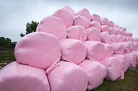 Round silage bales wrapped in pink wrap to raise money for Breast Cancer <br /> Picture Tim Scrivener 07850 303986<br /> &hellip;.covering agriculture in the UK&hellip;.