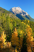 Mt Kerkeslin with fall colors from the Icefields Parkway, Jasper National Park, Alberta, Canada.