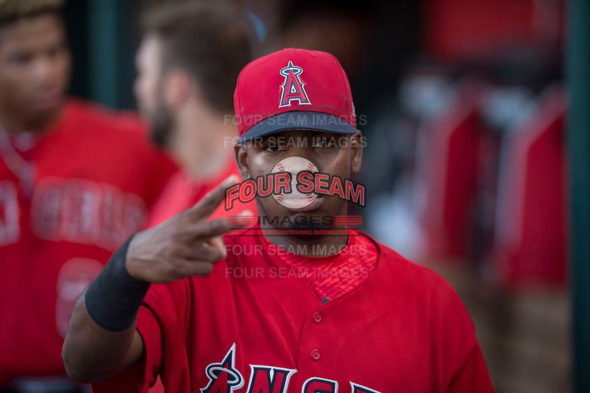 AZL Angels second baseman Jose Verrier (4) poses for a photo in the dugout during an Arizona League game against the AZL Indians 2 at Tempe Diablo Stadium on June 30, 2018 in Tempe, Arizona. The AZL Indians 2 defeated the AZL Angels by a score of 13-8. (Zachary Lucy/Four Seam Images)