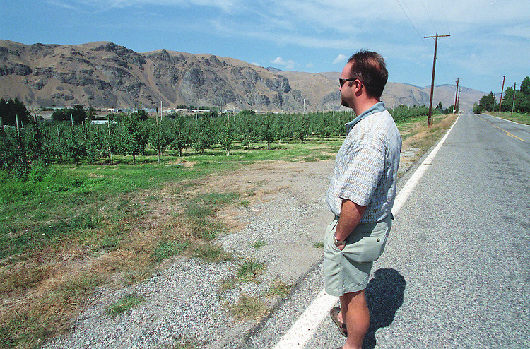 8-25-98.WASHINGTON APPLE ORCHARDS-Tony Buak of export sales  with Columbia Marketing International packing plant in Wenatchee, Washington checks out this years apple crop.  .Washington state orchards are on track for a record harvest in 1998..CONGRESSIONAL QUARTERLY PHOTO BY DOUGLAS GRAHAM