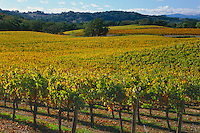 Vineyards along Highway 128<br />