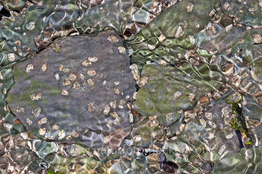 Köcherfliege, Köcherfliegen, Larve, Larven in ihrem Köcher am Gewässergrund, Agapetus fuscipes, caddisfly, sedge-fly, rail-fly, caddisflies, sedge-flies, rail-flies, Trichoptera
