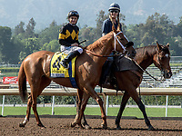 ARCADIA, CA. JUNE 3: #4 Finest City ridden by Mike Smith in the post parade of the Beholder Mile on June 3, 2017 at Santa Anita Park, in Arcadia, CA.(Photo by Casey Phillips/Eclipse Sportswire/Getty Images)