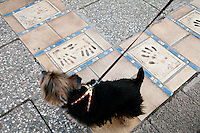 Handprints of Hollywood stars in the sidewalk near the Palais des Congres, Cannes, France, 3 April 2013
