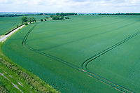 Aerial view of winter wheat field -  Cambridgeshire, May