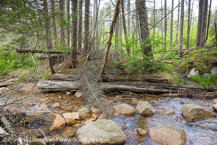 Remnants of a wooden bridge along a spur line of the old East Branch & Lincoln Railroad (1893-1948) in the Pemigewasset Wilderness of Lincoln, New Hampshire. This spur line came off of the Carrigain Branch of the EB&L Railroad, and it was used to access the Notch Brook drainage of the Pemigewasset Wilderness. This small bridge crossed Notch Brook.