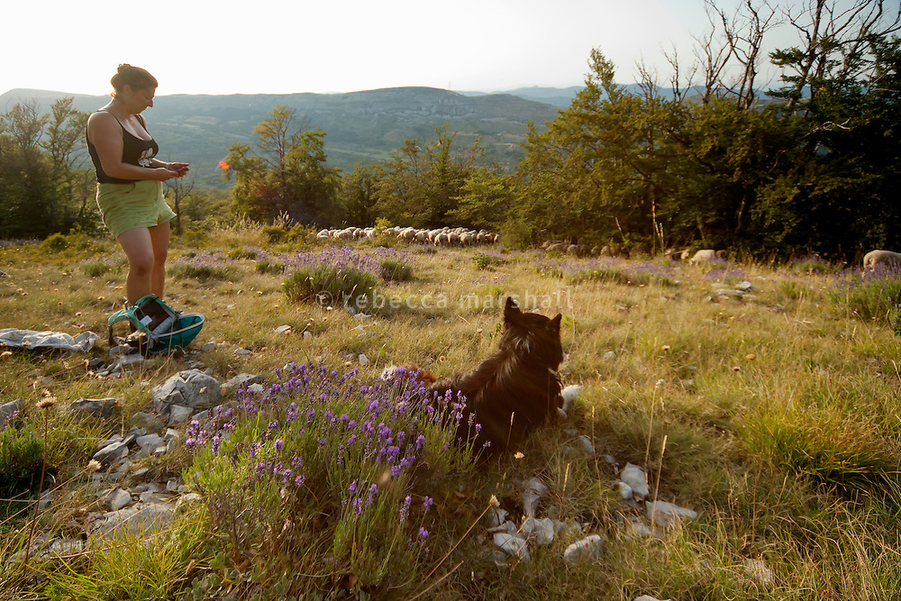 Isabelle Feynerol picks up mobile telephone reception close to the summit of La Montagne du Thiey as her sheepdog watches over her flock of sheep above Canaux in the Alpes Maritimes above Grasse, France, 02 August 2013. Isabelle brings the sheep down from the high mountain pasture to the barn at night every day, to protect the ewes from wolf attacks.