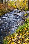 Mill Creek runs along fallen golden, autumn leaves on the banks.