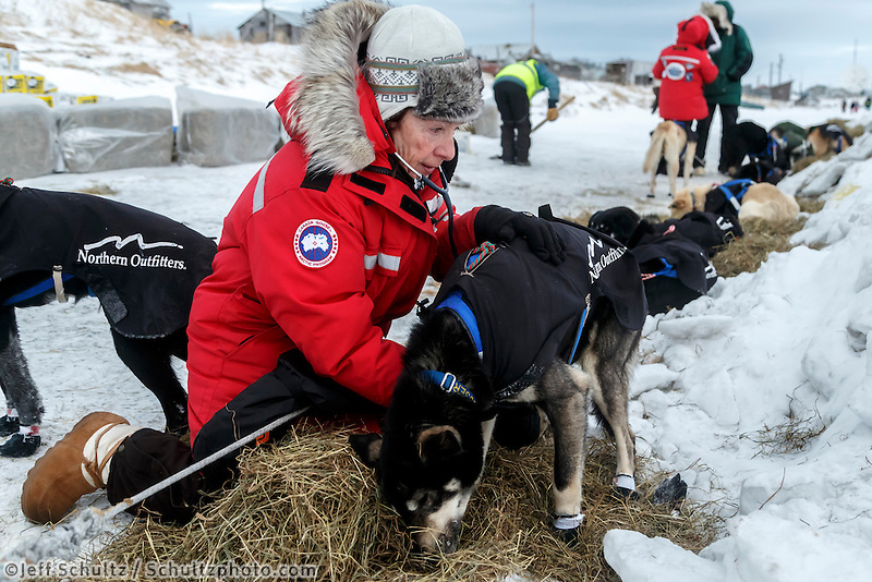 Volunteer veterinarian Debbie Hadlock examines a Martin Buser dog shortly after his arrival at the Unalakleet checkpoint in the morning on Monday March 16, 2015 during Iditarod 2015.  <br /> <br /> (C) Jeff Schultz/SchultzPhoto.com - ALL RIGHTS RESERVED<br />  DUPLICATION  PROHIBITED  WITHOUT  PERMISSION