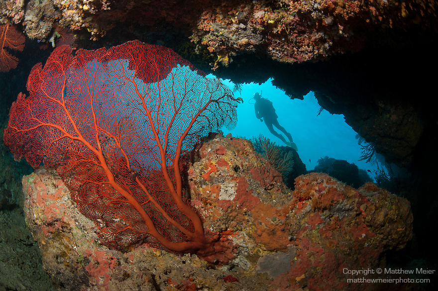 Bligh Waters, Vatu I Ra Passage, Fiji; a scuba diver is silhouette against the blue water visible through the opening to an underwater cave, with a large, red gorgonian sea fan growing inside