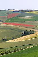 France, Pas-de-Calais (62), Côte d'Opale, Escalles, vue sur les champs cultivés depuis le Mont d'Hubert  //  France, Pas de Calais, Cote d'Opale (Opal Coast), Escalles:  View cultivated fields from Mount Hubert