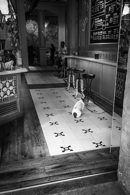 A dog waits for his master in a local cafe, Barcelona.