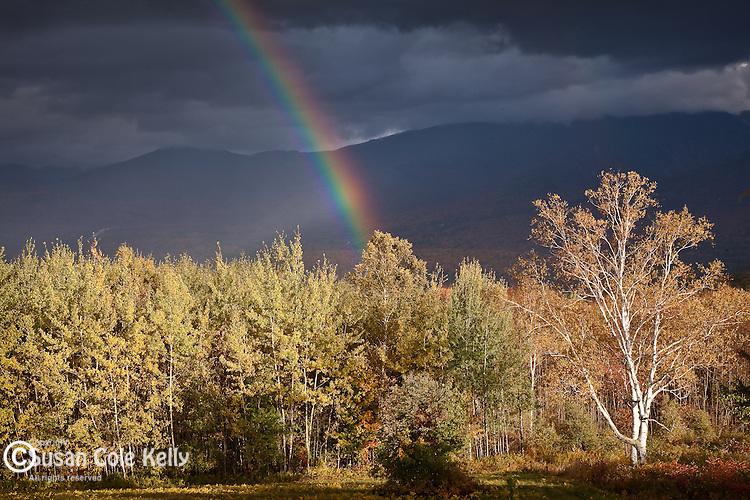A rainbow punctuates fall foliage, Sugar Hill, White Mountains, NH