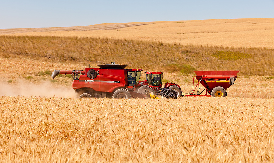 A Case 8120 combine and Case 335 tractor harvest wheat on a warm summer day in the Palouse of Eastern Washington State.