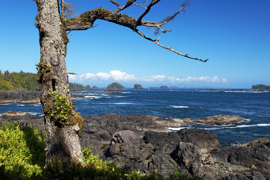 Barkley Sound framed by tree along Lighthouse Loop, Wild Pacific Trail, Ucluelet, Vancouver Island, Canada