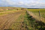 Roman road chalk landscape, near Baltic Farm, Bishops Cannings, Wiltshire, England, UK
