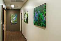 Lake Hills Clinic corridor artwork