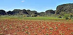 A tobacco farm near Vinales, Cuba