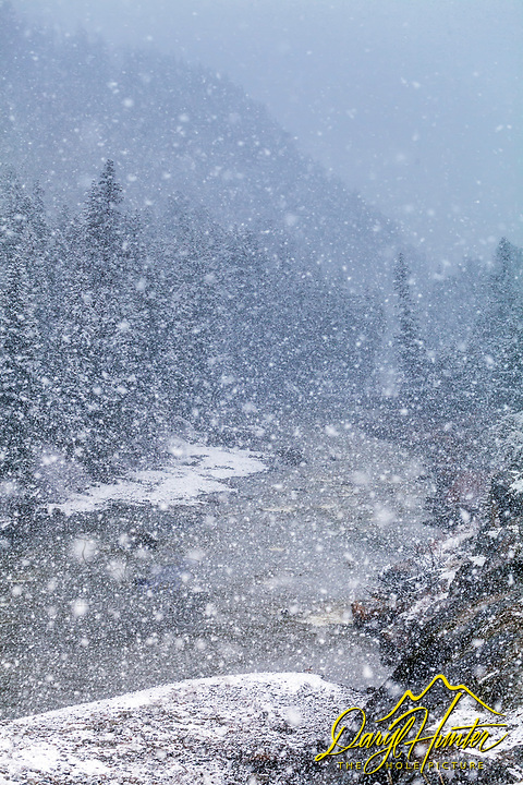 April snow squall, the Narrows of the Lamar River in the Lamar Valley of Yellowstone National Park.