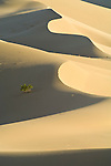 Ibex Dunes and the Saddle Peak Hills Wilderness, southern corner of Death Valley National Park, Calif.