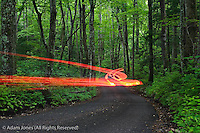 Time exposure of car tailligthts through forest, Roaring Fork Motor Nature Trail, Great Smoky Mountains National Park, Tennessee