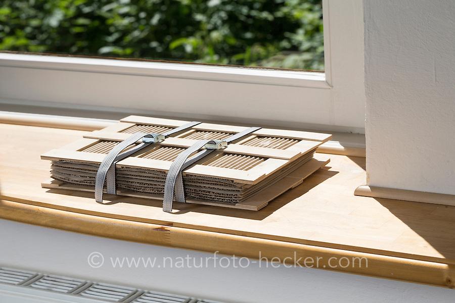 Pflanzenpresse liegt auf Fensterbank über der Heizung an einem trockenen Ort. Botanik, Botanisieren, botany, Herbar, herbaria, Herbarien, herbarisieren, herbier, Pflanzenbestimmung, Pflanzenherbar