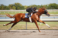 #61Fasig-Tipton Florida Sale,Under Tack Show. Palm Meadows Florida 03-23-2012 Arron Haggart/Eclipse Sportswire.