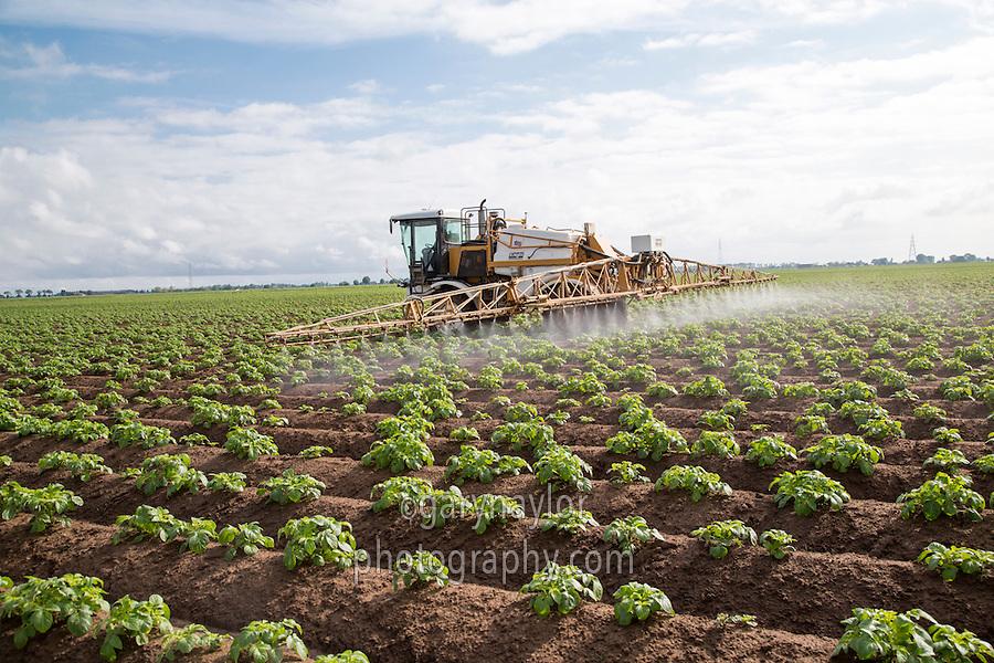 Blight spraying potatoes - Lincolnshire, May