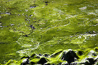 Imagine a verdant alien landscape with mountains, wide plains, lakes and rivers -  an illusion created by green moss draped over rocks and floating on the waters of the San Leandro Marina on San Francisco Bay.