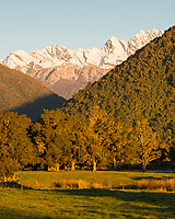 Farmland with native totara trees with sunset on winter mountains, Butler Ranges of Southern Alps near Whataroa, Westland Tai Poutini National Park, West Coast, UNESCO World Heritage Area, New Zealand, NZ