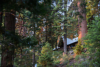 Chalet Simone, nestled into the trees of Sequoia Crest.