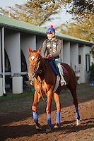 Animal Kingdom and exercise rider at Palm Meadows, Boynton Beach Florida. 03-01-2012